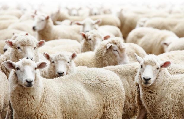 Image result for France : des musulmans empêchés de sacrifier le mouton de l'Aïd al-Adha