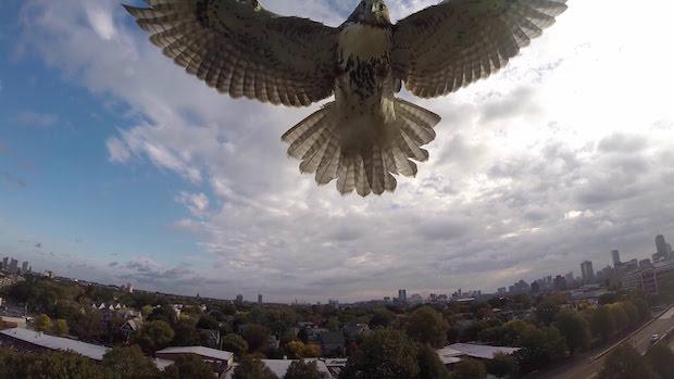 drone aigle